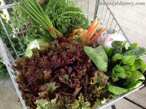 Lettuce, Spinach, Cabbage, Cauliflower, Scallions, Carrots, Peas!