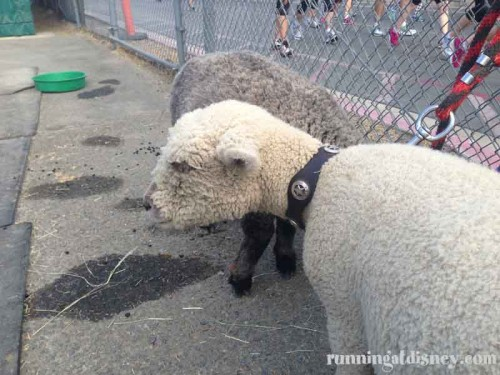 023DL10K-Sheep