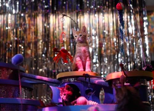 kitty-halftime-show