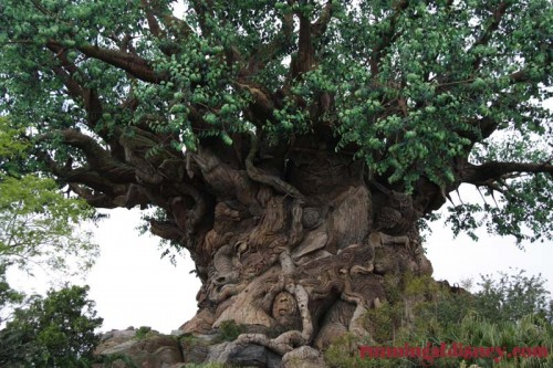 Tree-of-Life-Disney-Animal-Kingdom